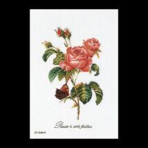 Rose Redouté - keresztszemes készlet
